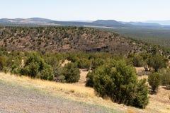 Floresta e montanhas Fotos de Stock Royalty Free