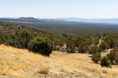 Floresta e montanhas Fotos de Stock