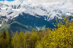 Floresta e montanhas de Svaneti Fotografia de Stock Royalty Free