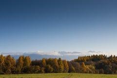 Floresta e montanhas do outono Imagens de Stock