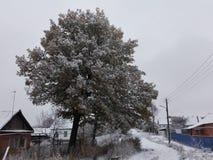 Floresta e neve Fotografia de Stock
