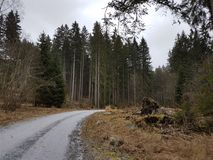 Floresta e neve Imagem de Stock Royalty Free