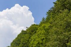 Floresta e nuvem Imagens de Stock