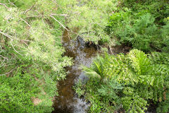 A floresta e o rio na natureza Fotos de Stock
