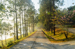Floresta e passagem das árvores no jardim Foto de Stock Royalty Free