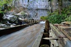 Floresta e pedras selvagens imagem de stock