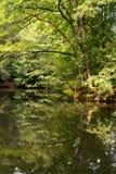 Floresta e reflexão da vegetação na água em Tiergarten, Berlim fotografia de stock royalty free