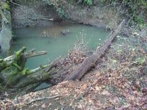 Floresta e rio Foto de Stock Royalty Free