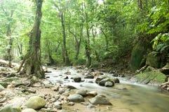 Floresta e rio imagem de stock