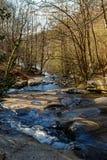 Floresta e rio Imagens de Stock