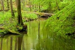 Floresta e rio na mola fotos de stock