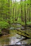 Floresta e rio na mola imagem de stock royalty free
