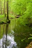 Floresta e rio na mola imagens de stock royalty free