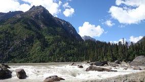 floresta e rocha do rio Foto de Stock