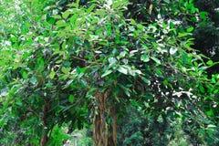 Floresta e ?rvore verde da selva Cen?rio natural bonito Selvas tropicais profundas Autumn Landscape Fundo da queda Luz solar da f imagem de stock