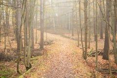 Floresta e trajeto do outono no dia nevoento Fotografia de Stock Royalty Free