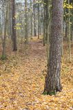 Floresta e trajeto do outono no dia nevoento Imagens de Stock Royalty Free