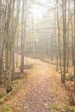 Floresta e trajeto do outono no dia nevoento Foto de Stock Royalty Free