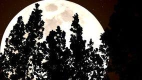 Floresta e uma lua enorme do Sepia filme