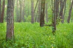 Floresta e wildflowers bonitos Imagem de Stock Royalty Free