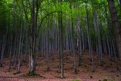 Floresta em Adrspach, CZ Imagens de Stock