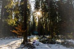 Floresta em Alemanha Fotos de Stock Royalty Free