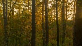 Floresta em Alemanha durante o outono Imagens de Stock