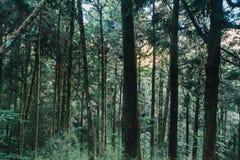 Floresta em Alishan Formosa imagens de stock