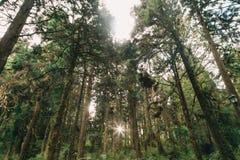 Floresta em Alishan Formosa, taichung imagem de stock royalty free