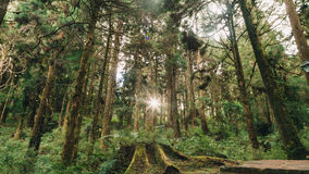 Floresta em Alishan Formosa, taichung foto de stock royalty free