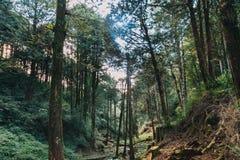 Floresta em Alishan Formosa, taichung fotos de stock