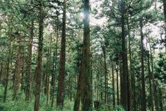 Floresta em Alishan Formosa, taichung fotografia de stock