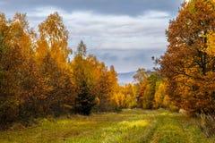 Floresta em Autumn Mood imagem de stock royalty free