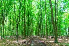 Floresta em Bélgica no verão Fotos de Stock