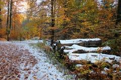 A floresta em cores do inverno fotos de stock royalty free