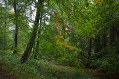 A floresta em cores novas fotografia de stock