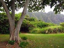 Floresta em Havaí Fotografia de Stock