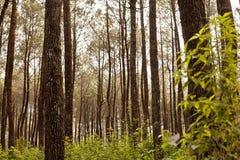 Floresta em Java Imagem de Stock
