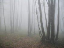 Floresta em Krimea, Ucrânia da faia Foto de Stock Royalty Free