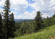 Floresta em Montanhas Rochosas canadenses Fotos de Stock