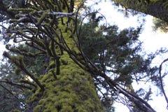 Floresta em Oregon fotos de stock royalty free