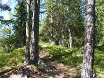 Floresta em Oslo fotos de stock royalty free