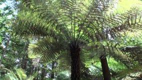 Floresta em paisagem surpreendente em Nova Zelândia vídeos de arquivo