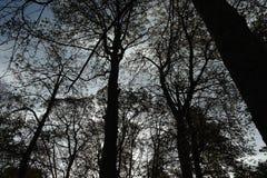 A floresta em Paris france Imagens de Stock Royalty Free