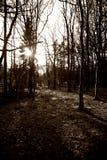 Floresta em preto e branco Fotografia de Stock