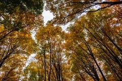 Floresta em rochas representadas, Munising do outono, EUA Opinião as copas de árvore Fotos de Stock