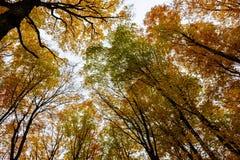 Floresta em rochas representadas, Munising do outono, EUA Opinião as copas de árvore Imagens de Stock Royalty Free