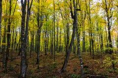 Floresta em rochas representadas, Munising do outono, MI, EUA Fotos de Stock Royalty Free