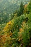 Floresta em Slovenia foto de stock royalty free
