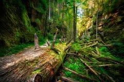 Floresta em Suíça boêmio, república checa imagens de stock